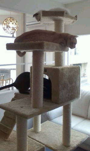 猫タワー2