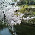 美観地区の桜2007 その2