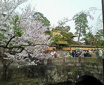 2006年桜満開その6