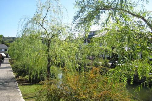 美観地区 秋の風景1
